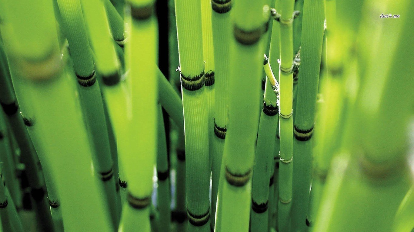Awesome Bamboo free background ID:246821 for laptop PC
