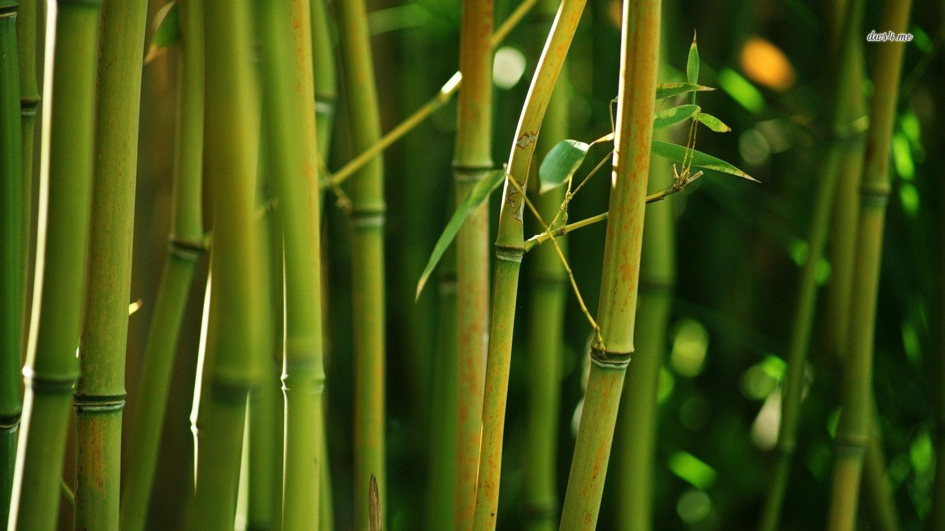 High resolution Bamboo laptop background ID:246822 for desktop