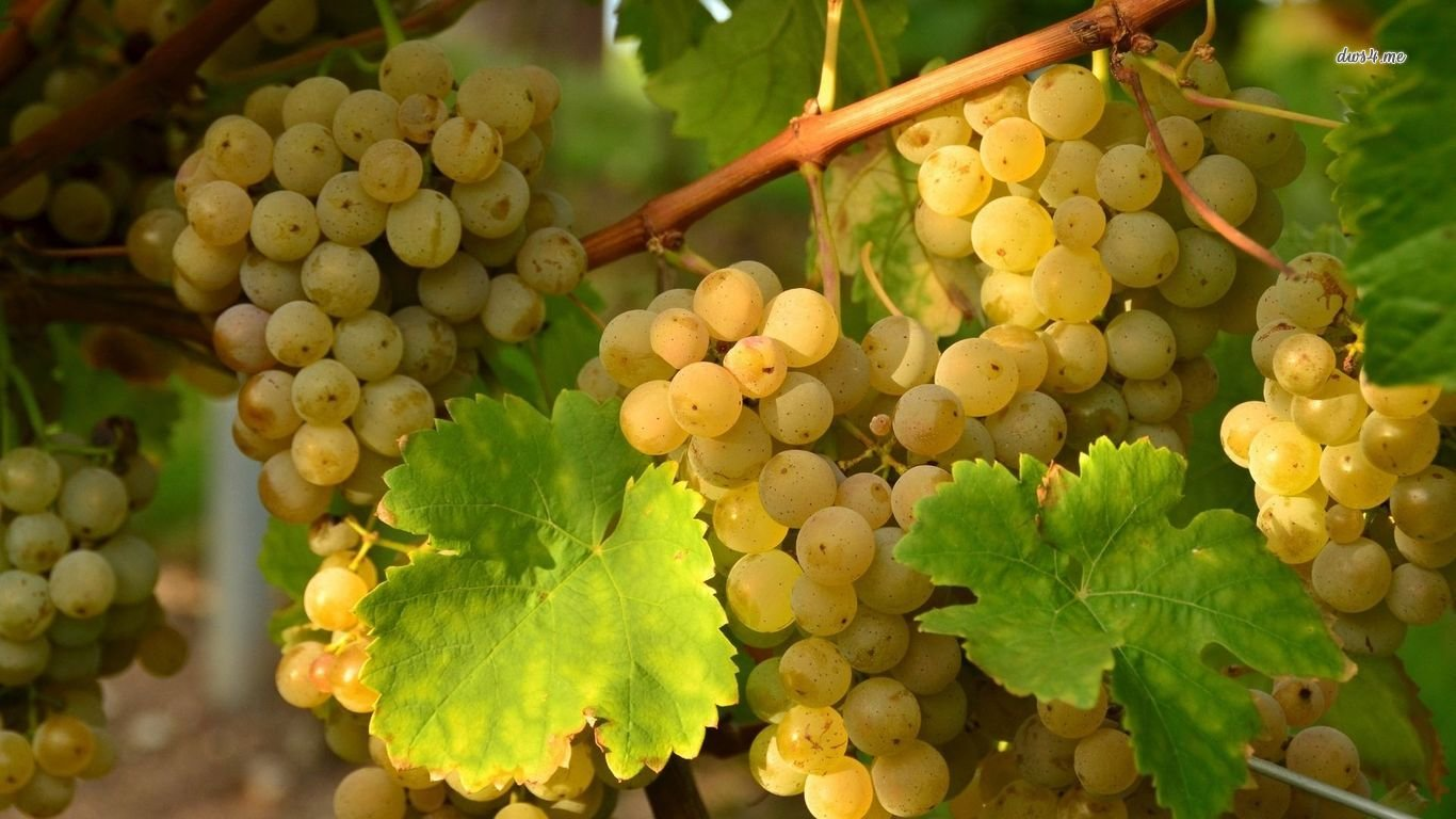 Awesome Grapes free background ID:420785 for hd 1366x768 PC