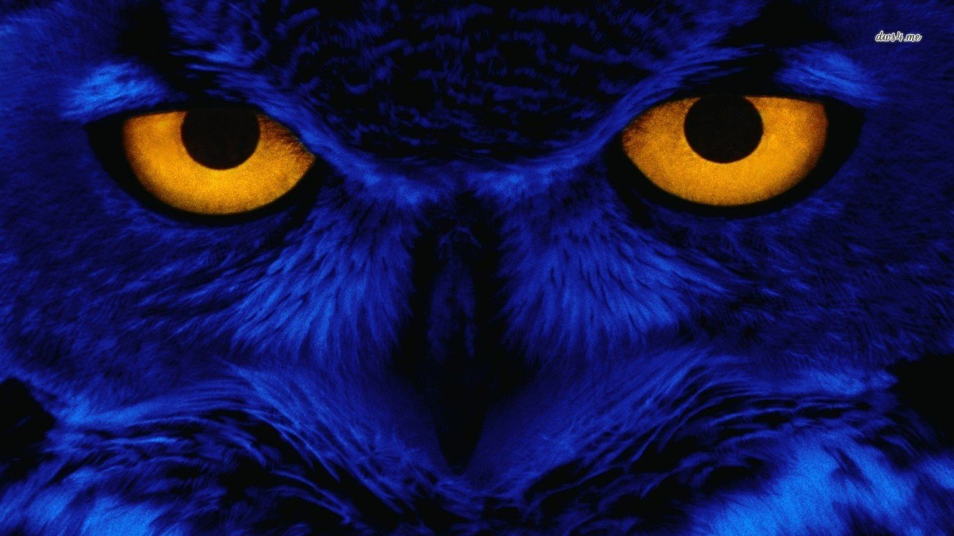 High resolution Owl 1366x768 laptop wallpaper ID:237079 for desktop