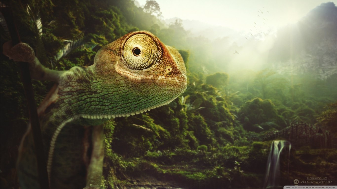 Download 1366x768 laptop Chameleon computer wallpaper ID:462527 for free