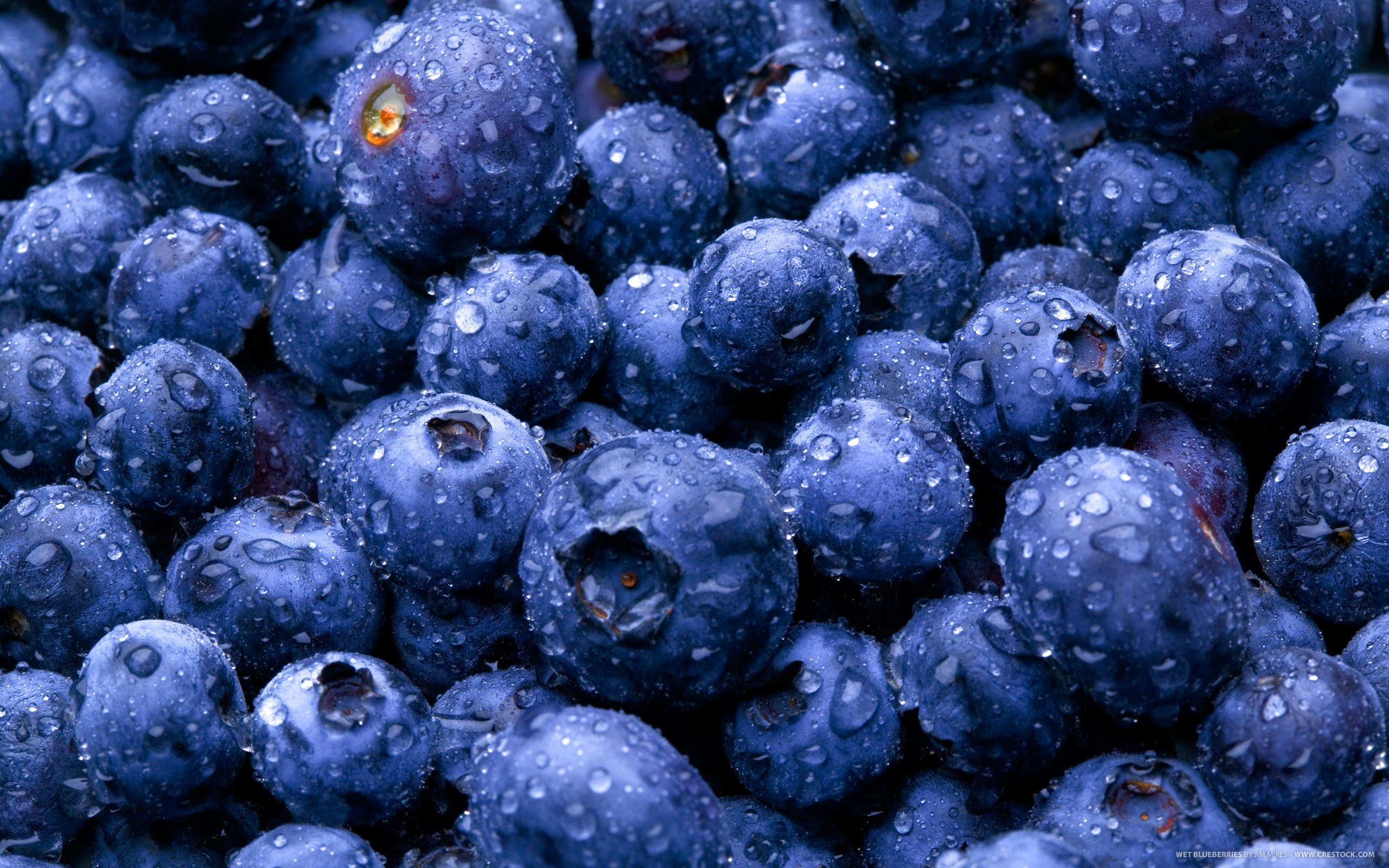 High resolution Blueberry hd 2560x1600 background ID:68976 for desktop