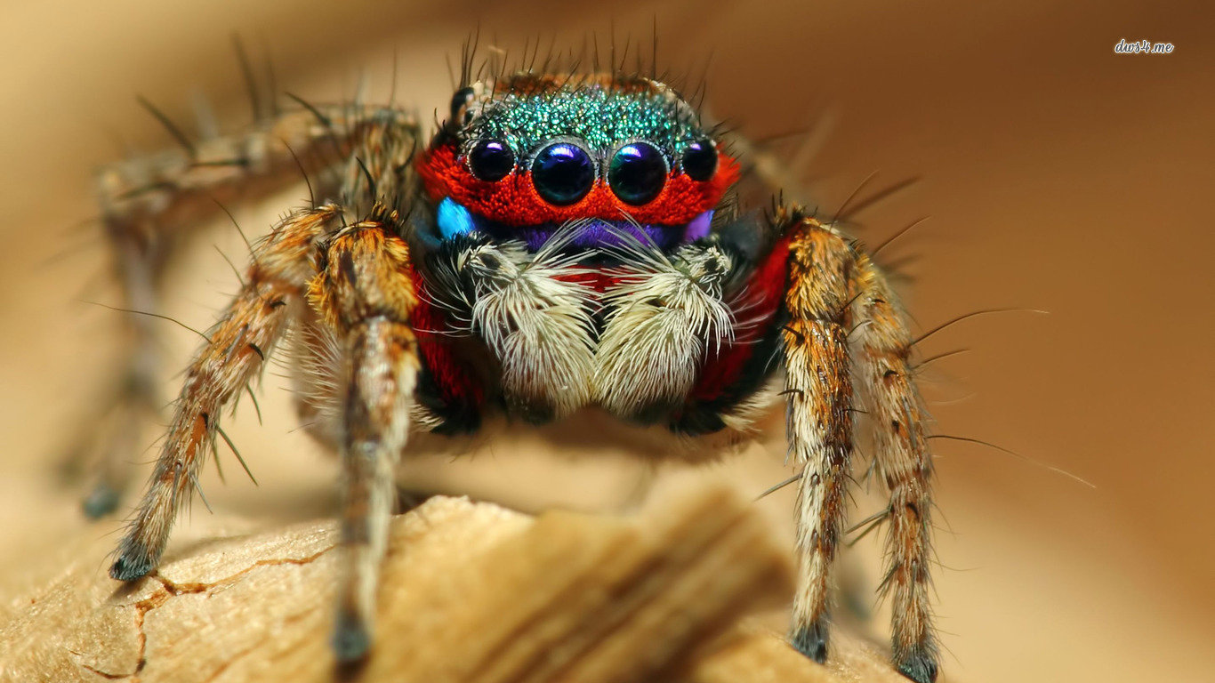 High resolution Spider laptop wallpaper ID:22148 for desktop