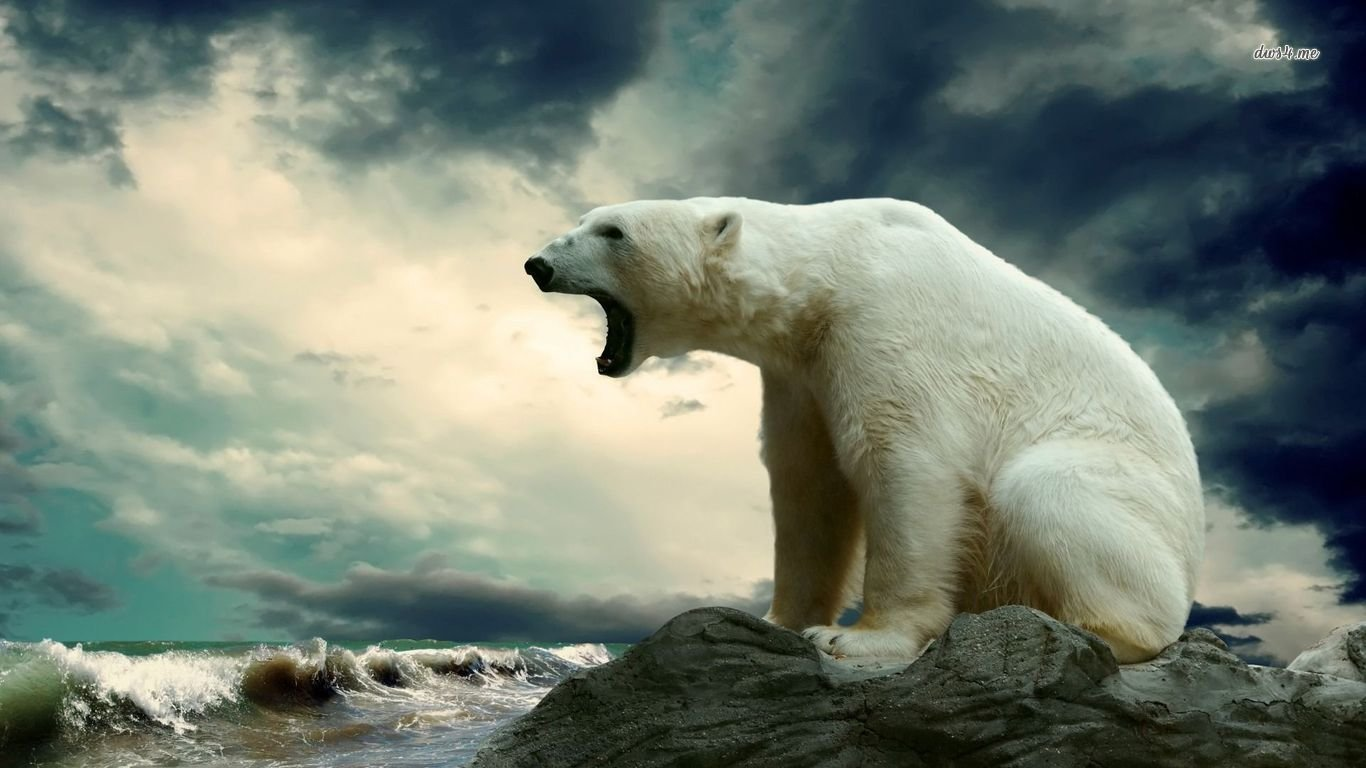 Free download Polar Bear background ID:360008 hd 1366x768 for computer