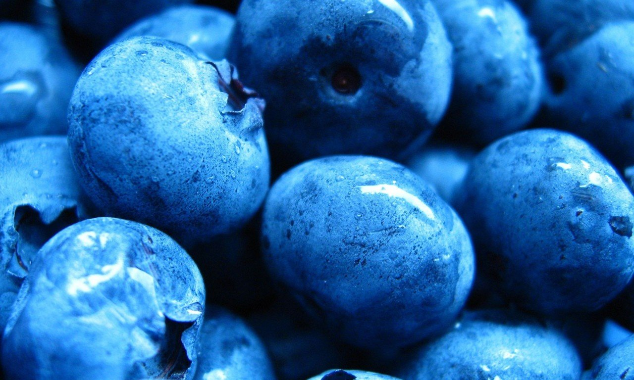 Best Blueberry wallpaper ID:69015 for High Resolution hd 1280x768 computer