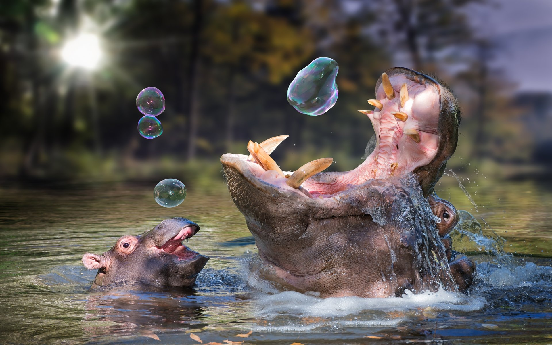 Awesome Hippo free background ID:28789 for hd 1920x1200 PC