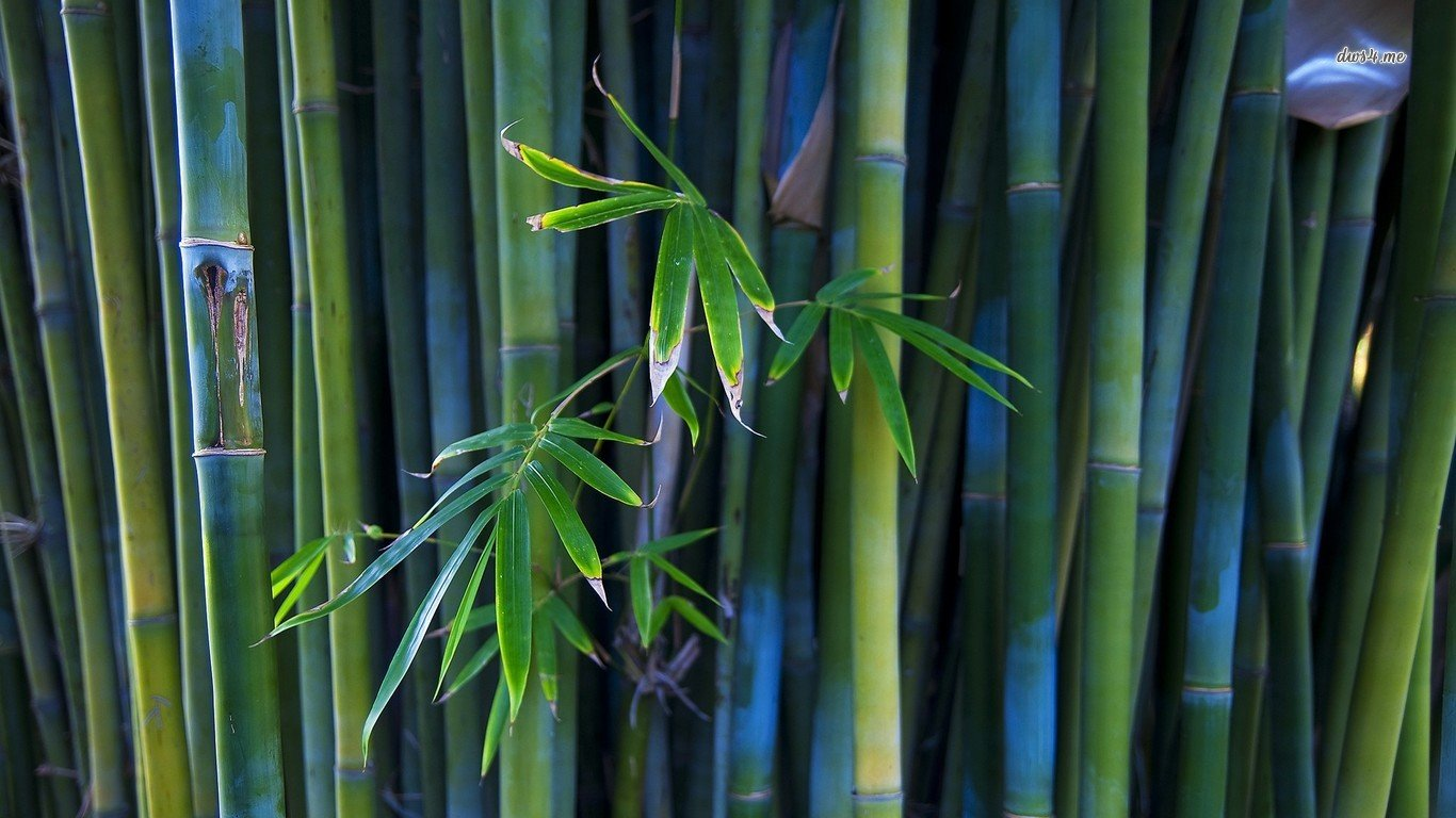 Free Bamboo high quality wallpaper ID:246820 for 1366x768 laptop PC