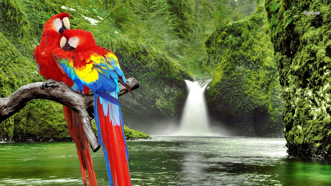 High resolution Macaw laptop wallpaper ID:46384 for desktop