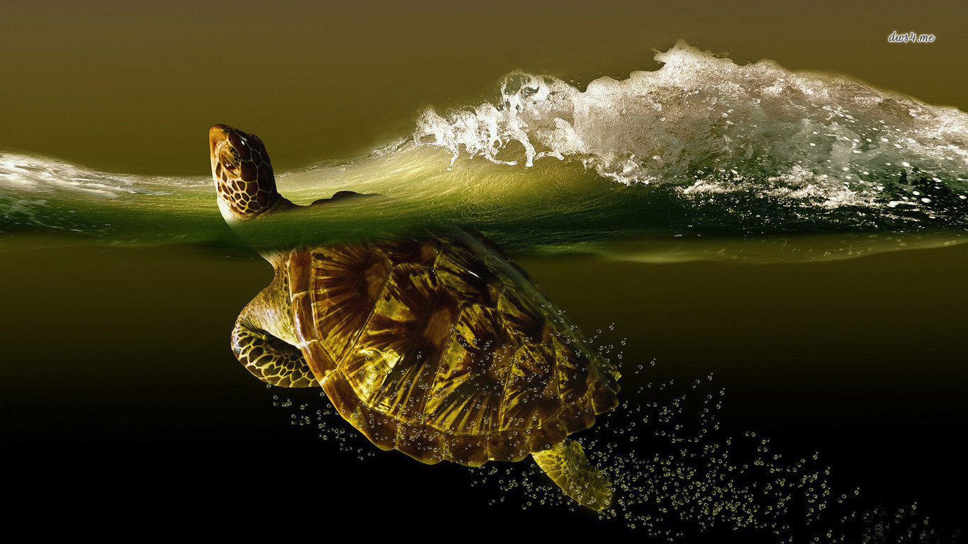 Awesome Turtle free background ID:29899 for hd 1366x768 computer