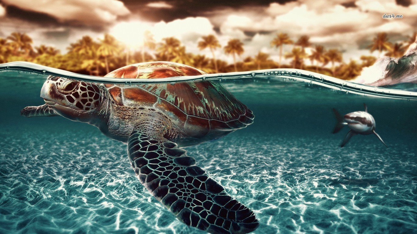 Free Turtle high quality background ID:29945 for laptop PC