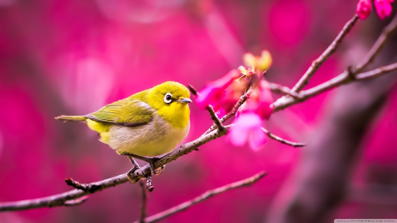 Awesome Bird free background ID:404896 for 1366x768 laptop desktop