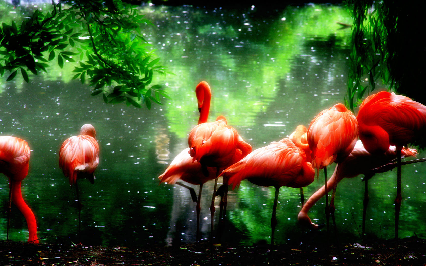 Free download Flamingo background ID:66641 hd 1680x1050 for computer