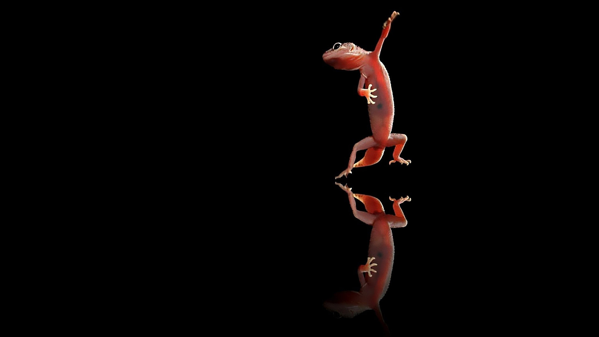 Free download Gecko background ID:114498 hd 1080p for desktop
