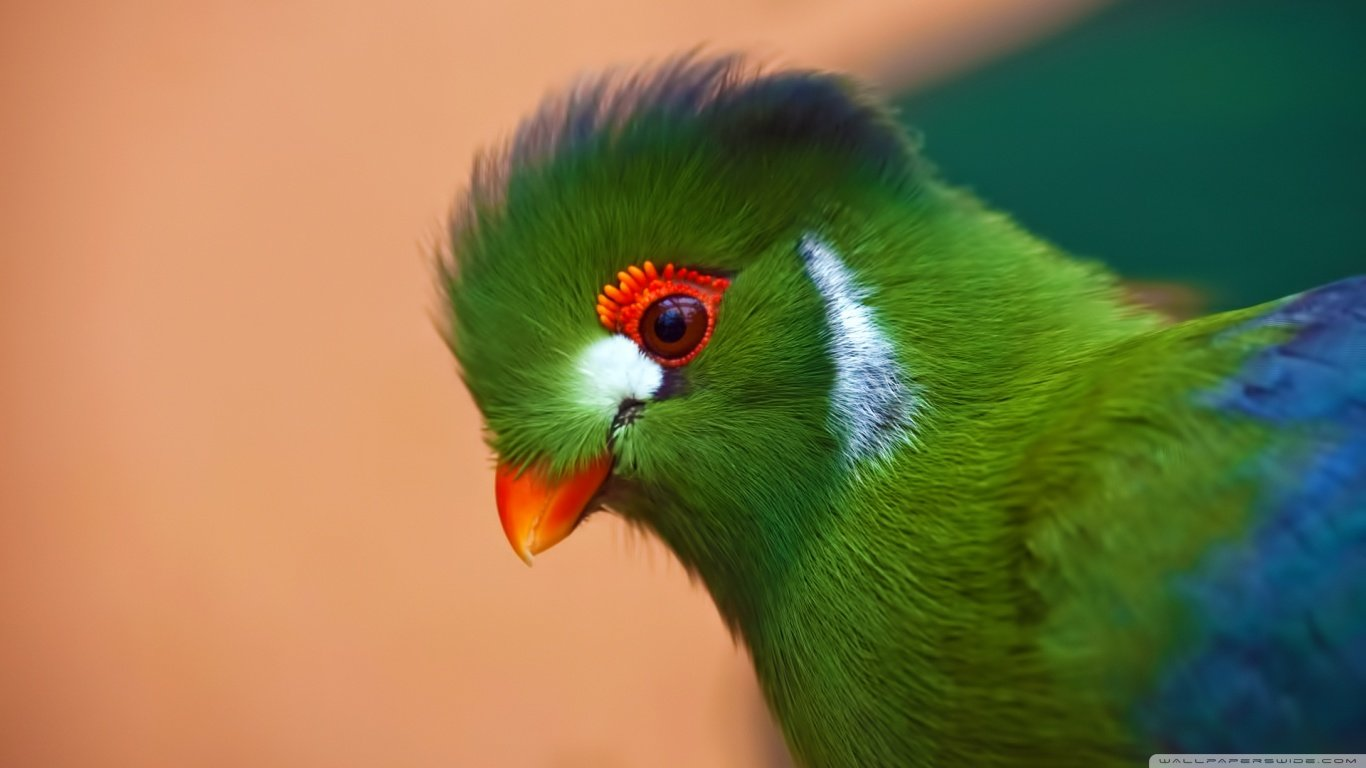 High resolution Parrot laptop wallpaper ID:25732 for computer