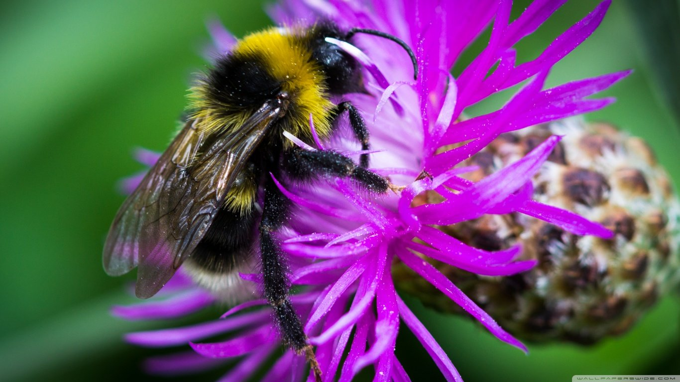 Download hd 1366x768 Bee computer wallpaper ID:460625 for free