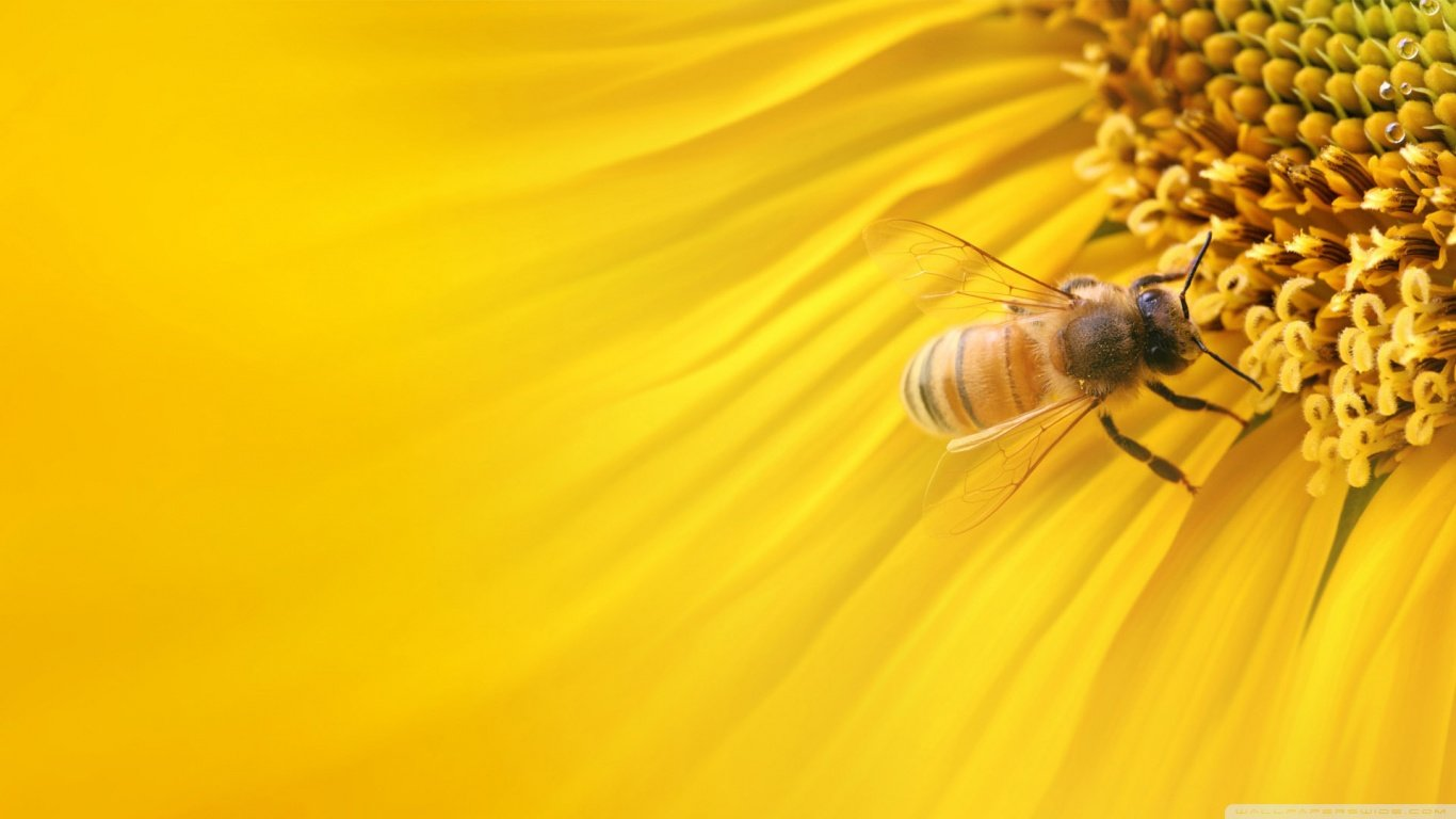 Free Bee high quality background ID:460627 for 1366x768 laptop PC
