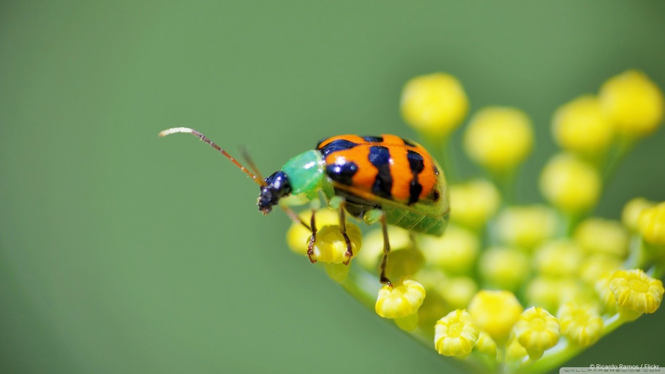 Best Ladybug wallpaper ID:270550 for High Resolution laptop desktop