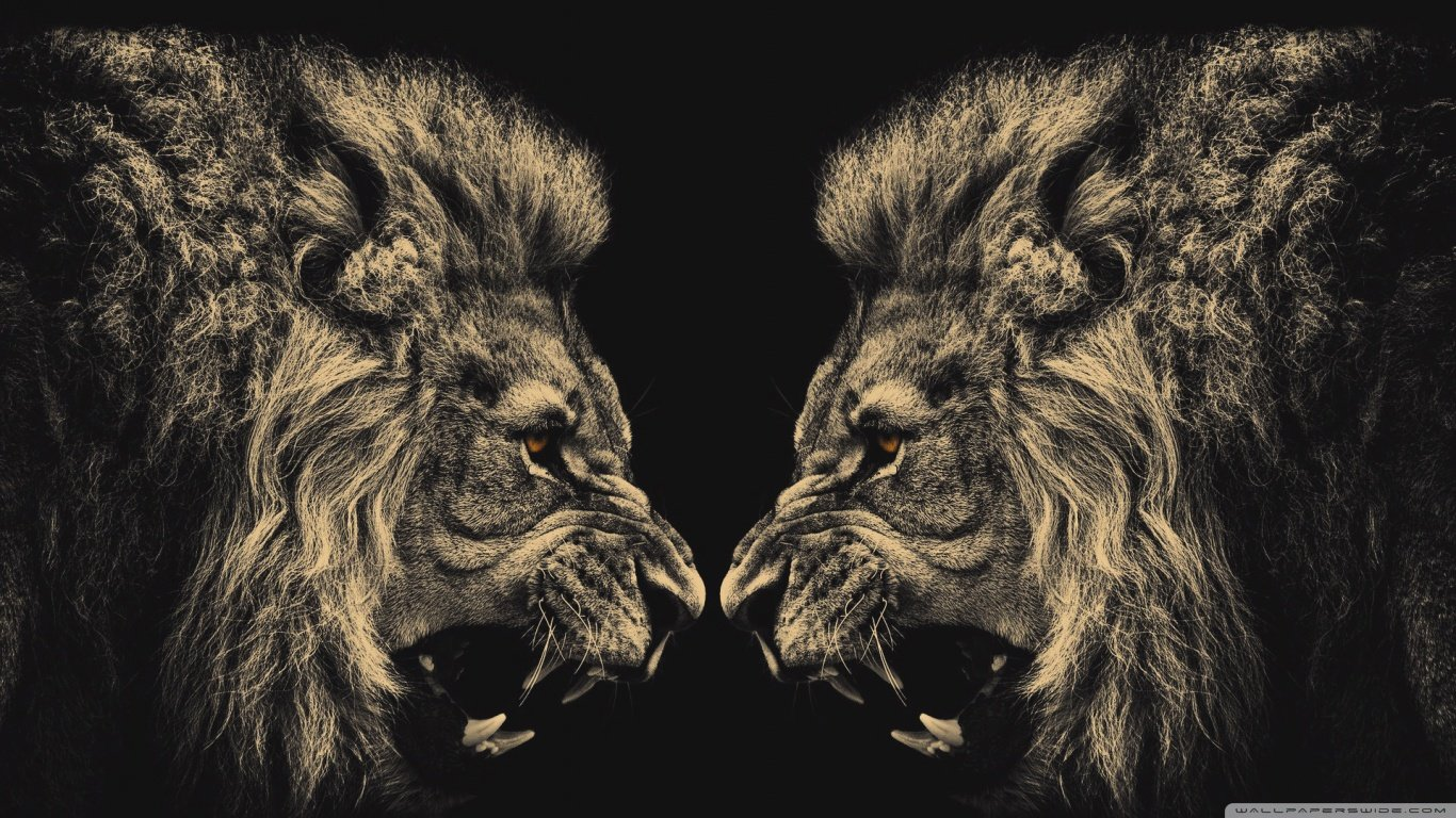 Free download Lion background ID:255393 1366x768 laptop for desktop