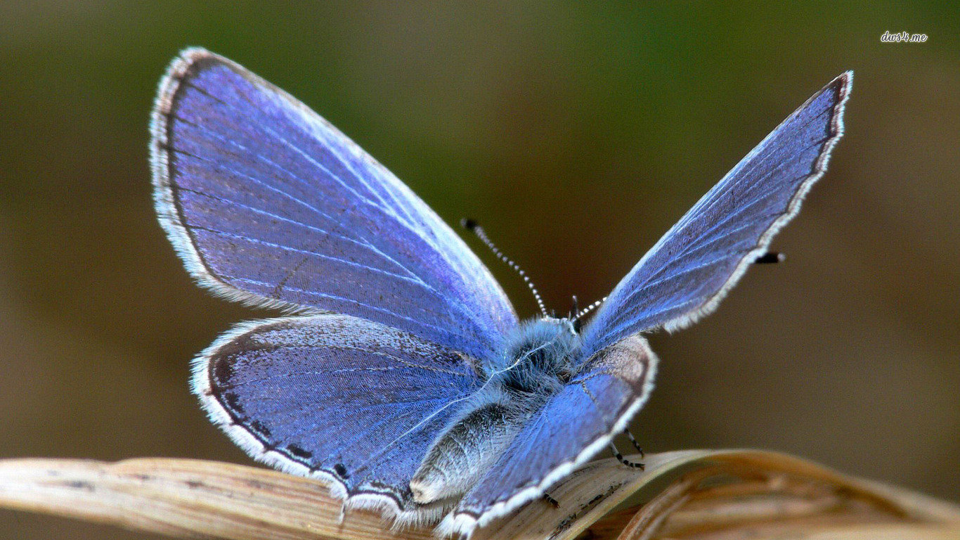 Download laptop Butterfly desktop background ID:168242 for free