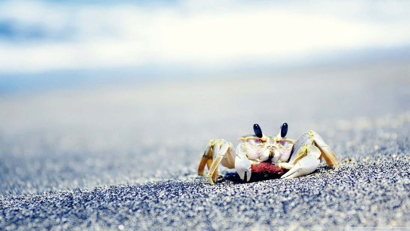 Best Crab background ID:294305 for High Resolution 1366x768 laptop computer