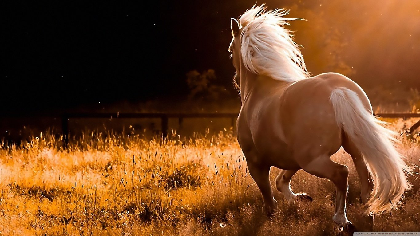 Awesome Horse free background ID:23292 for 1366x768 laptop desktop