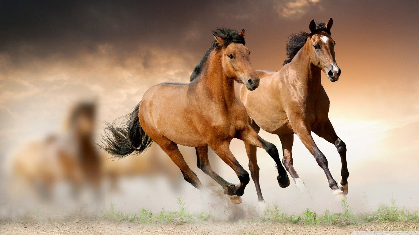 Free Horse high quality wallpaper ID:23240 for 1366x768 laptop desktop