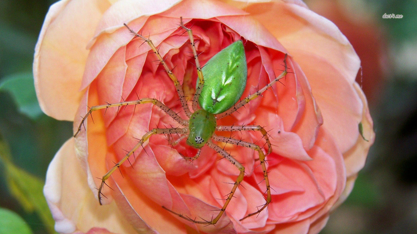 Free download Spider wallpaper ID:22119 hd 1366x768 for desktop