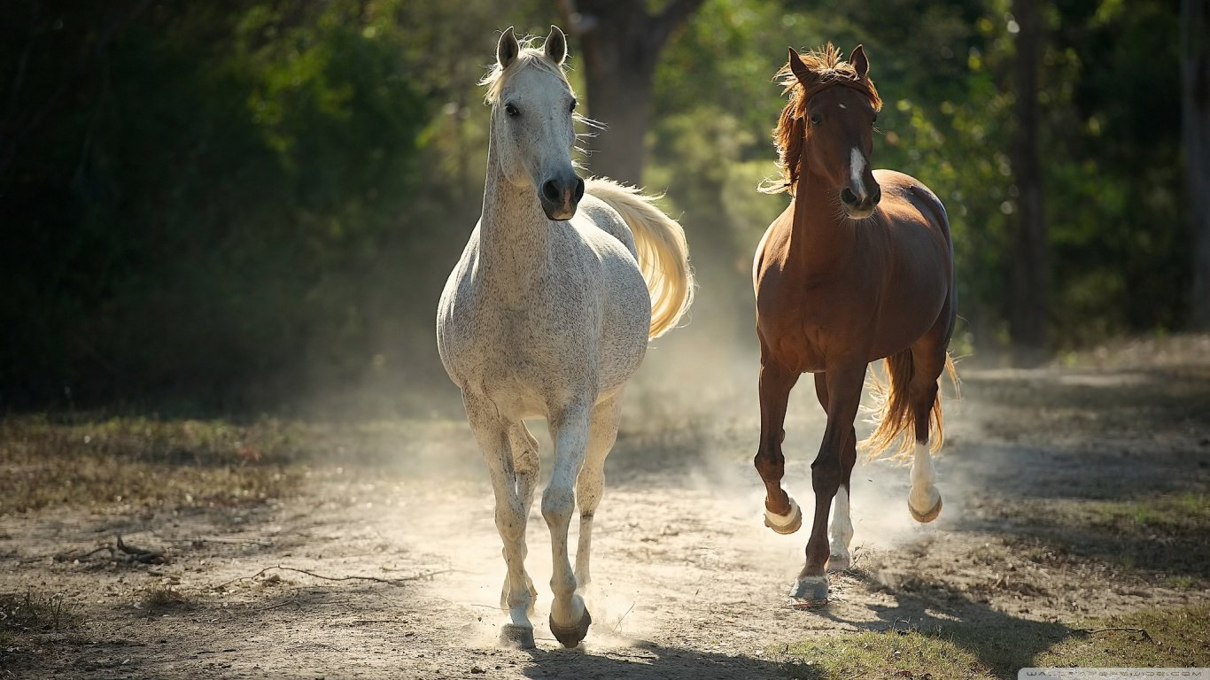 Horse Wallpapers 1366x768 Laptop Desktop Backgrounds