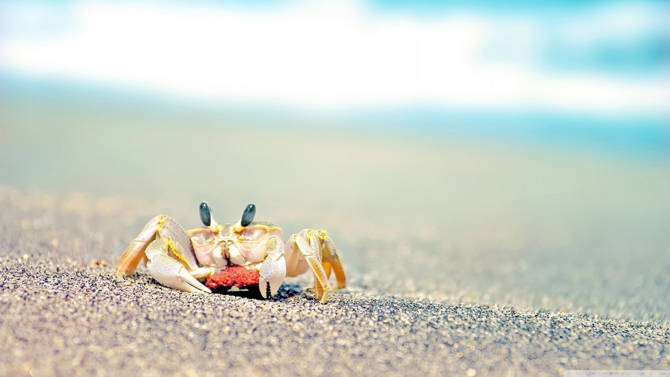 Download hd 1366x768 Crab PC background ID:294300 for free