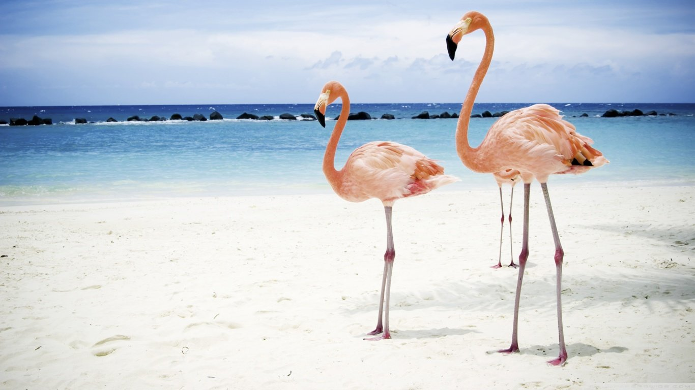 Best Flamingo wallpaper ID:66666 for High Resolution hd 1366x768 PC