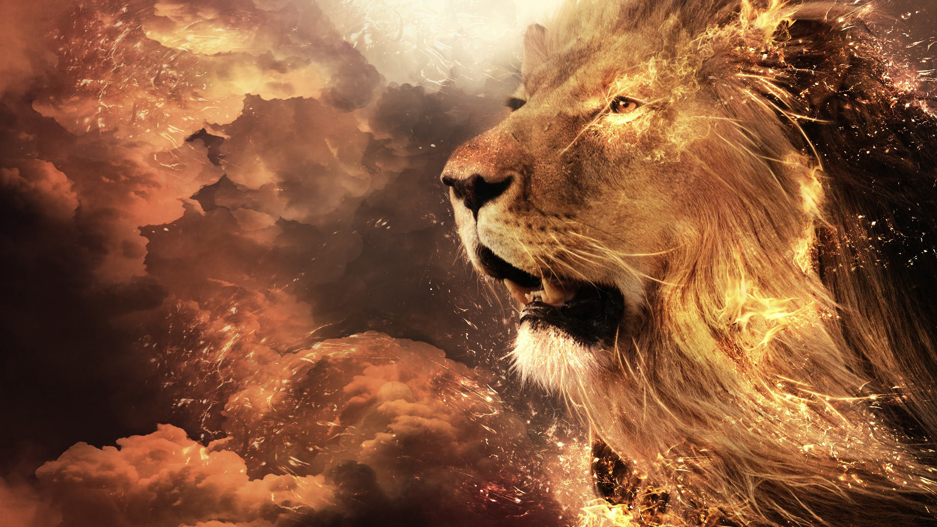 High resolution Lion 1080p wallpaper ID:255158 for PC