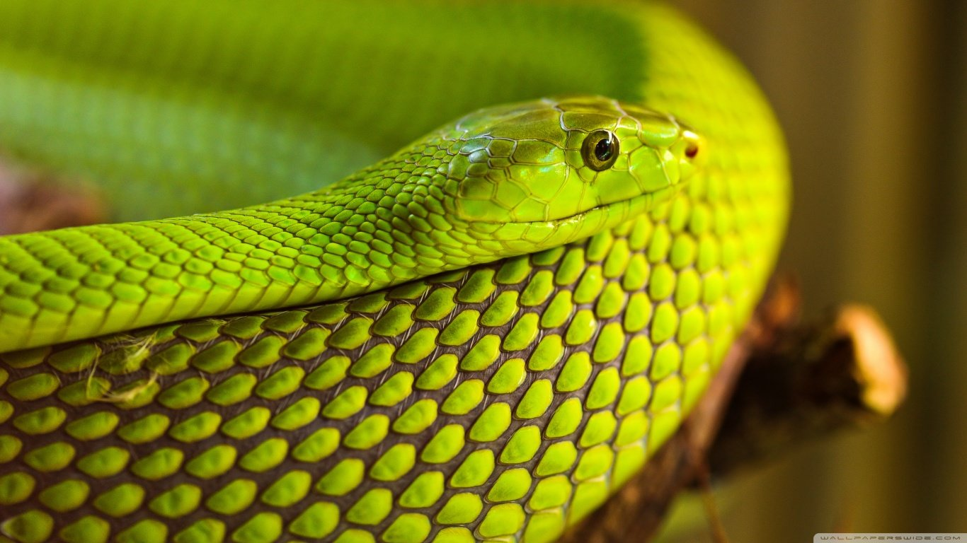 Free Snake high quality background ID:137328 for 1366x768 laptop PC