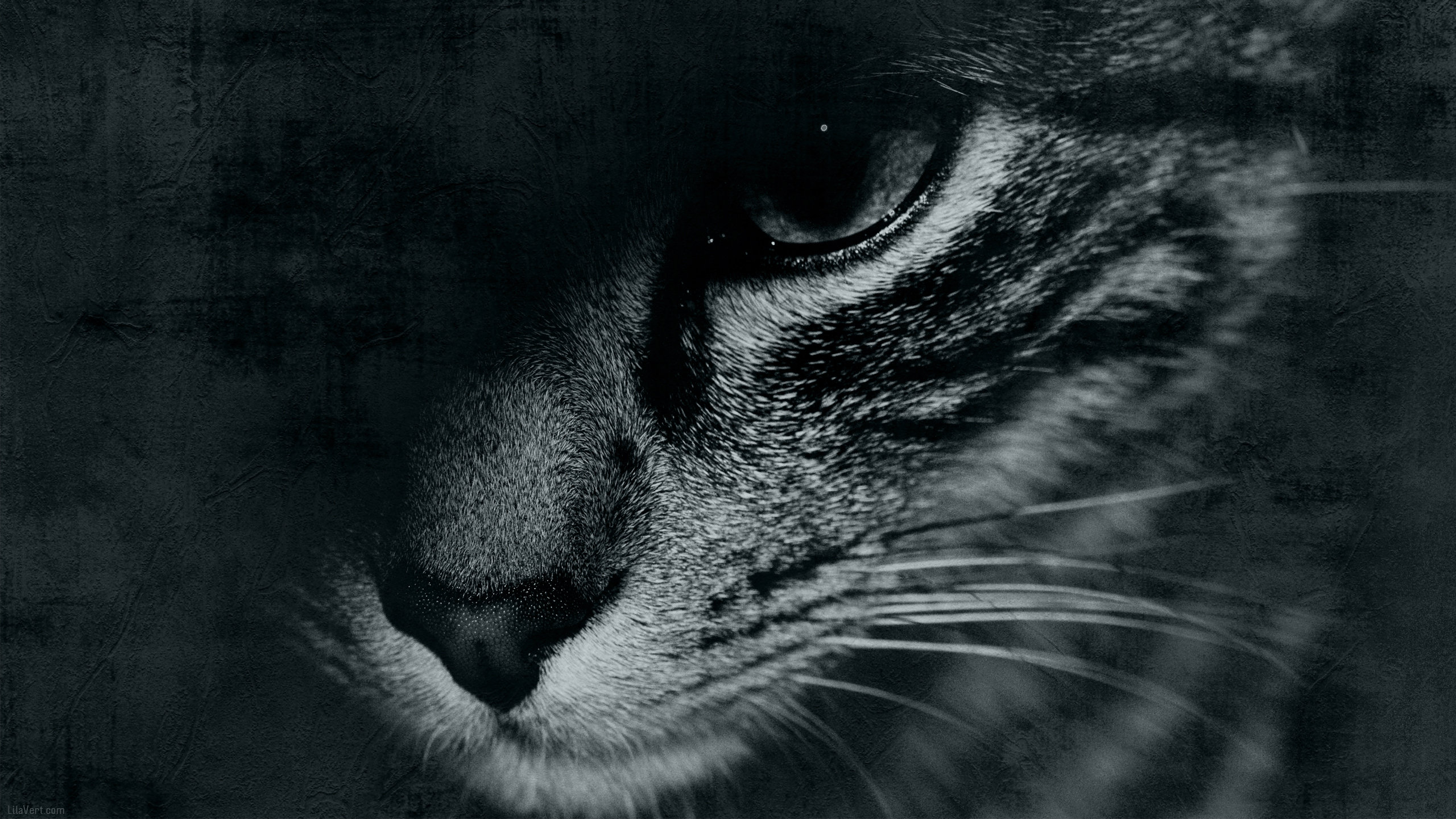 Download Hd 2560x1440 Cat PC Wallpaper ID427243 For Free