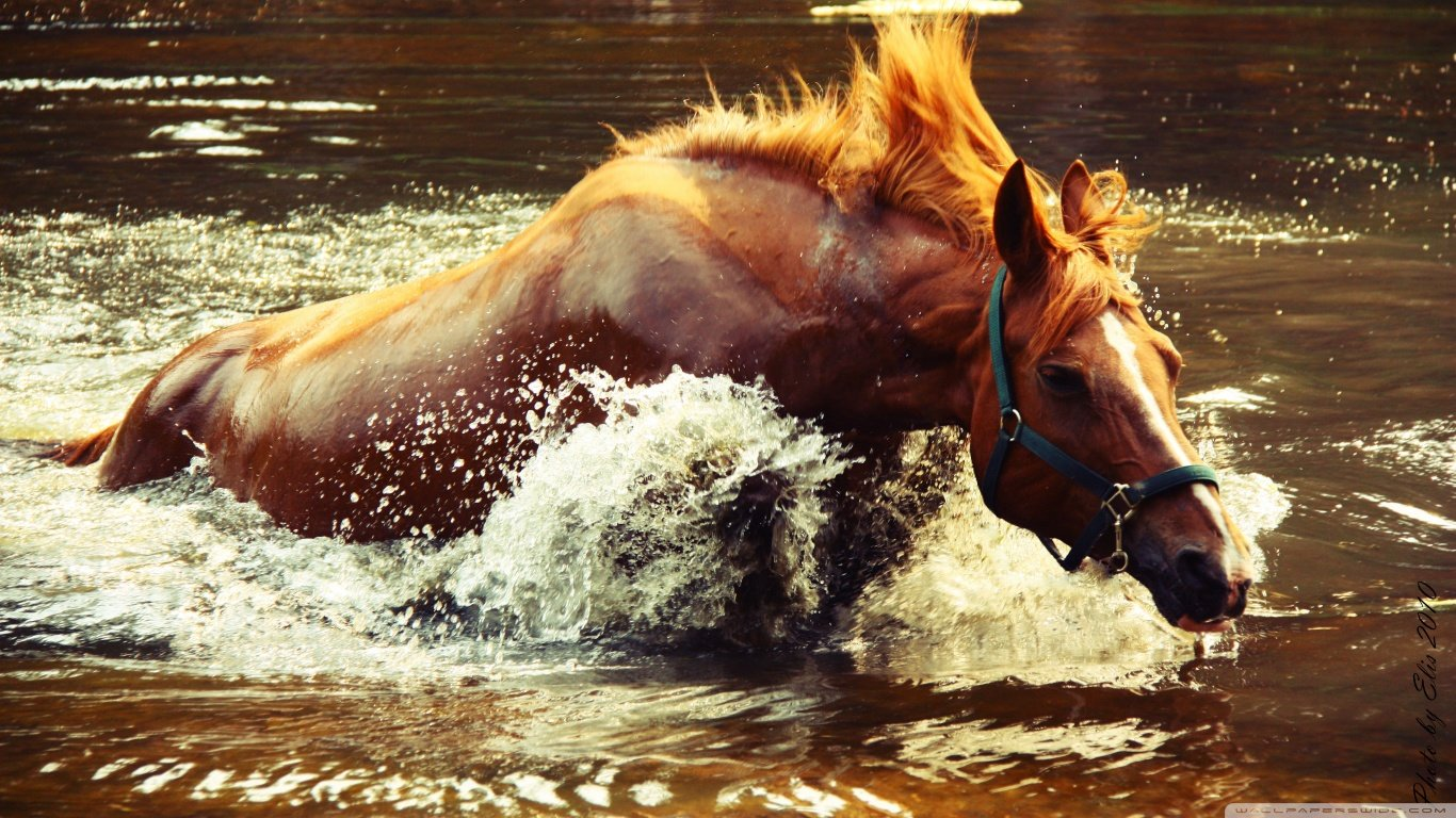 Free download Horse wallpaper ID:23885 1366x768 laptop for computer