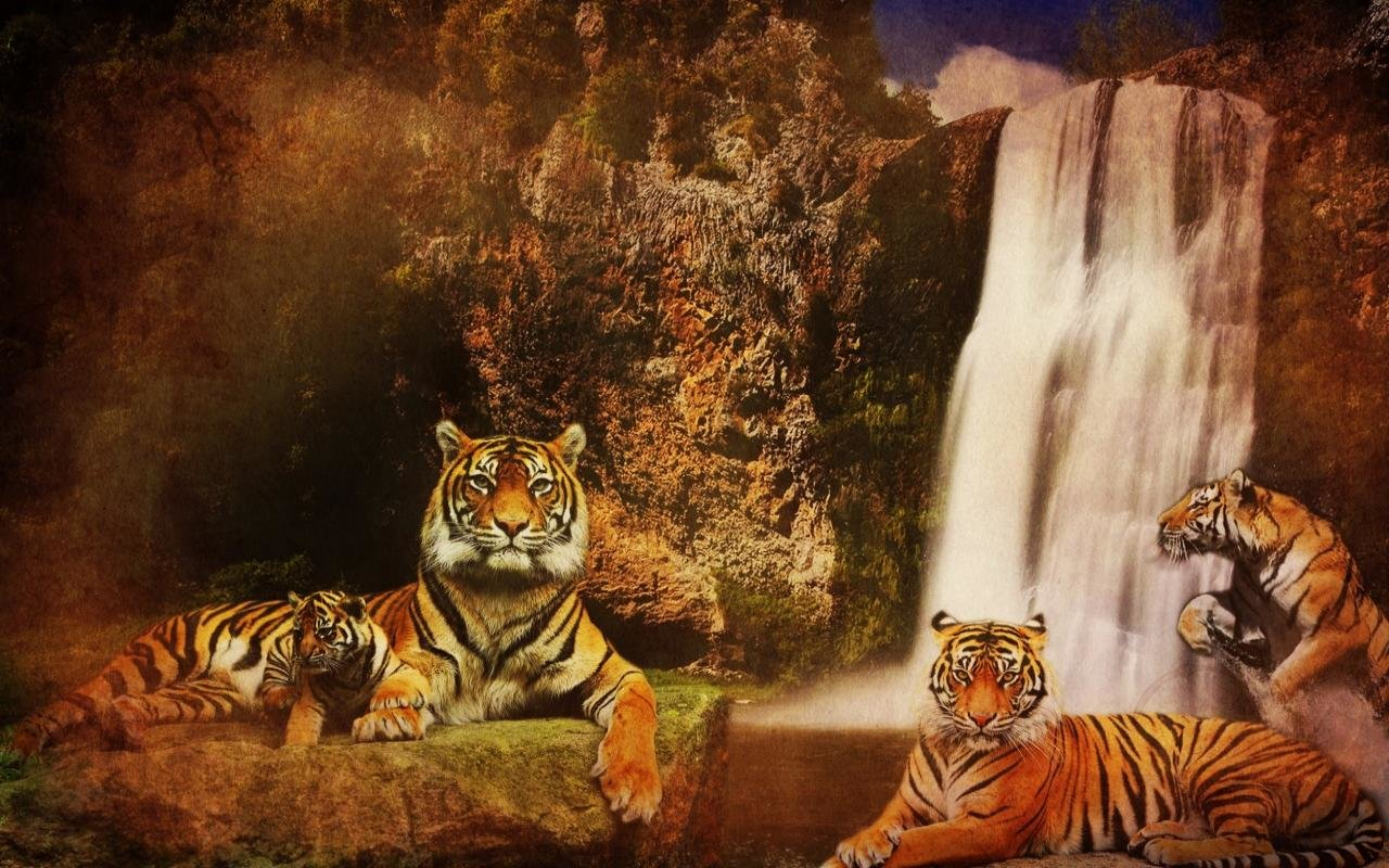 Free download Tiger background ID:115826 hd 1280x800 for desktop