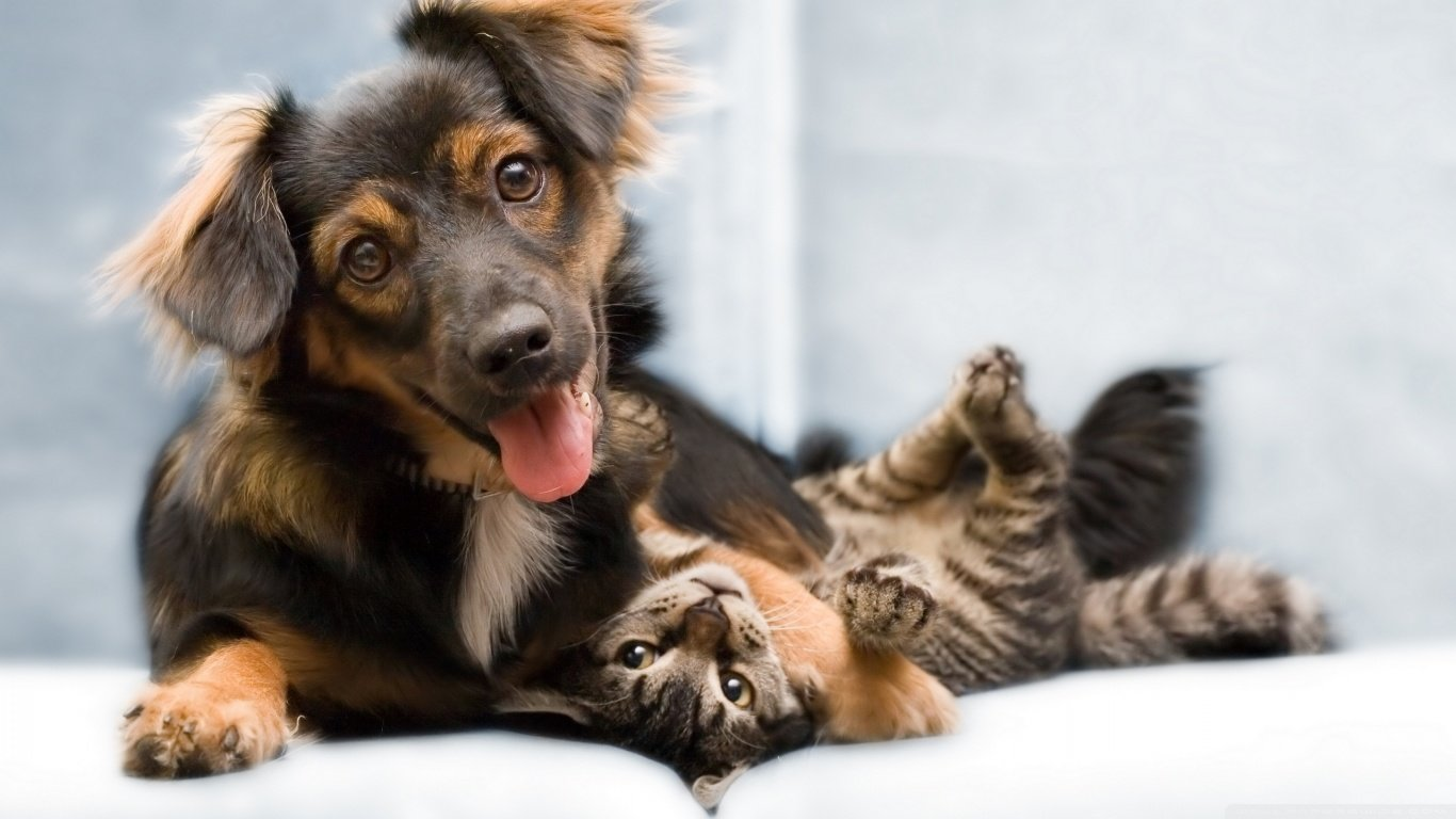 Free Cat and Dog high quality wallpaper ID:125359 for hd 1366x768 computer