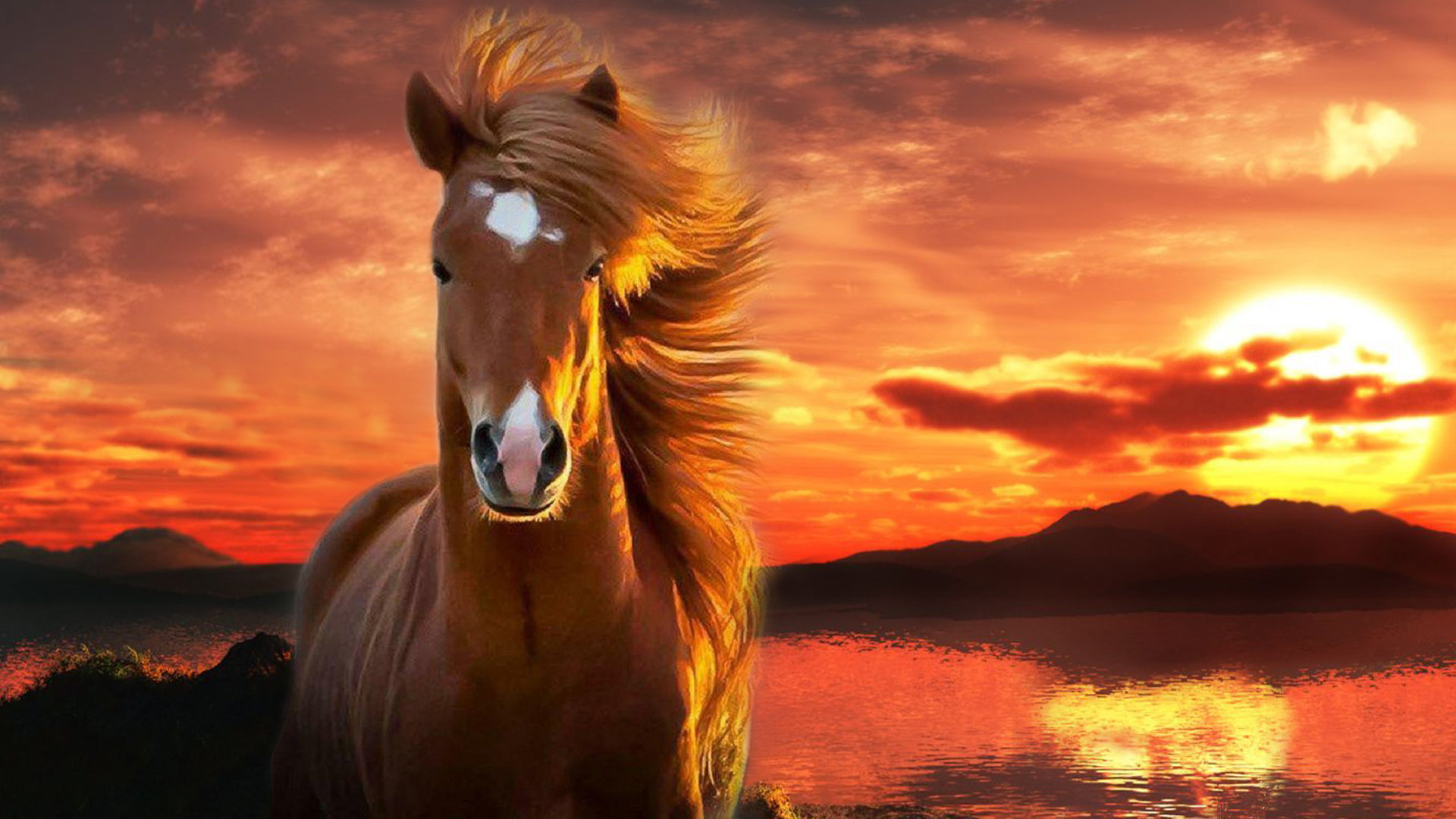 High resolution Horse 1080p background ID:23157 for computer