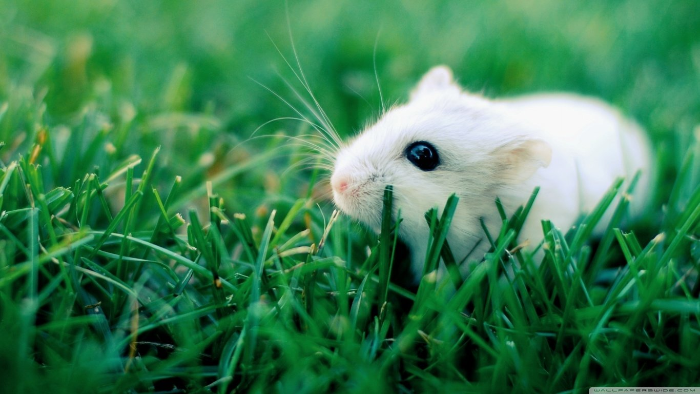 High resolution Mouse laptop wallpaper ID:132493 for PC