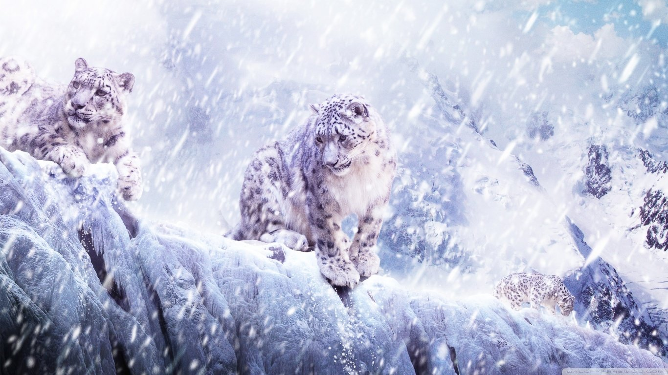 Best Snow Leopard background ID:34468 for High Resolution laptop computer