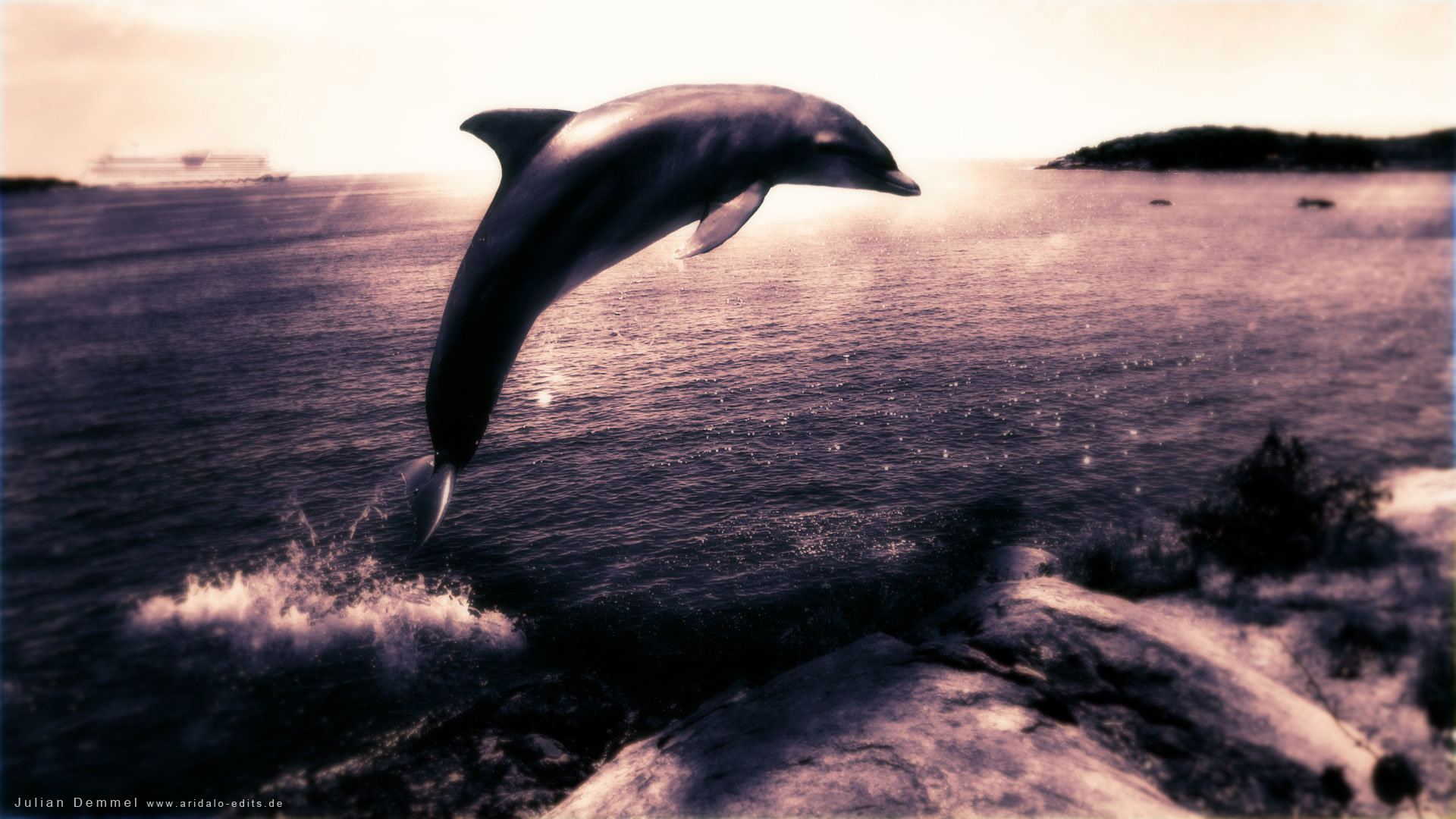 Free download Dolphin background ID:248418 full hd for computer