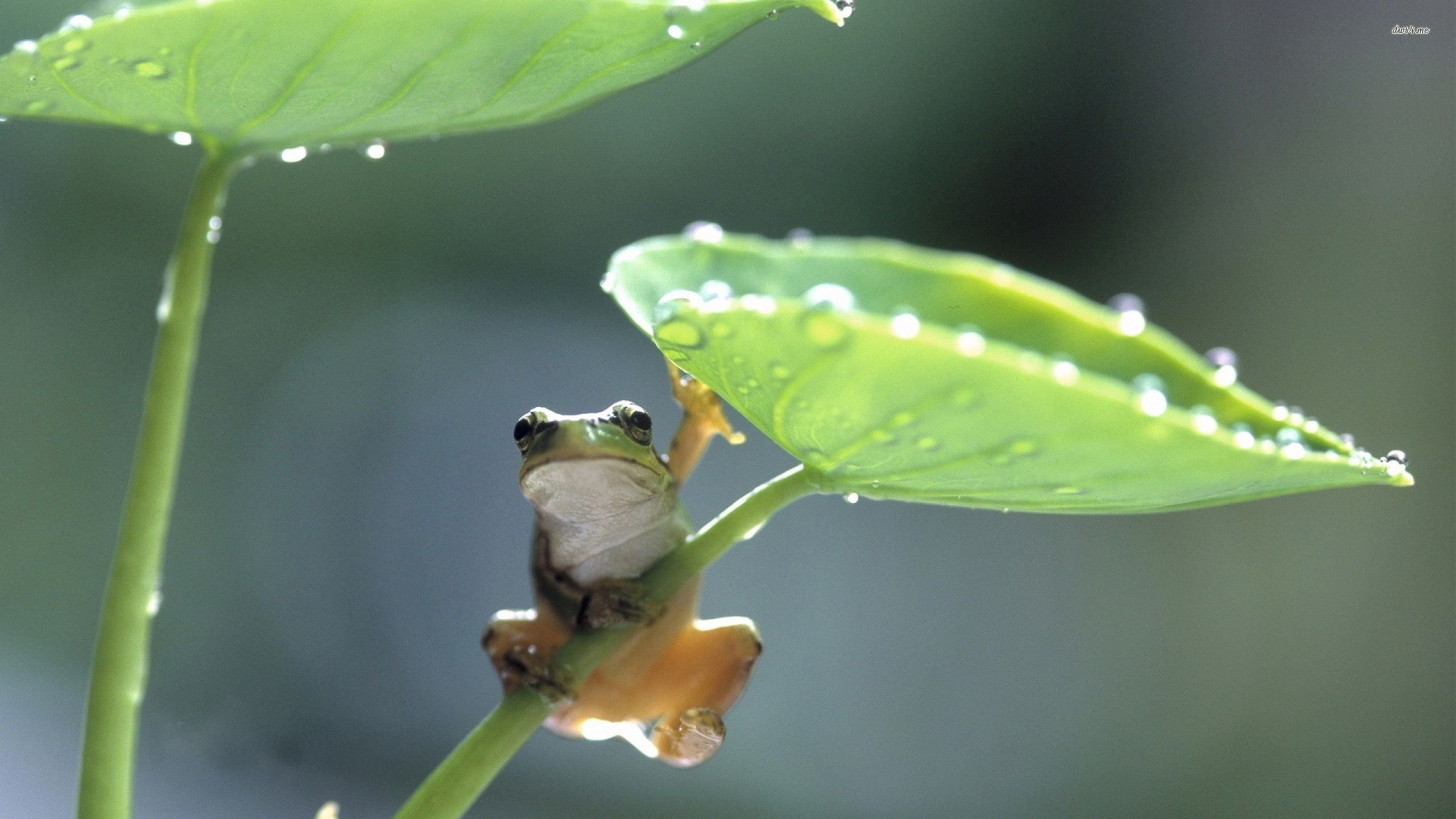 Free download Frog wallpaper ID:328743 hd 2560x1440 for desktop