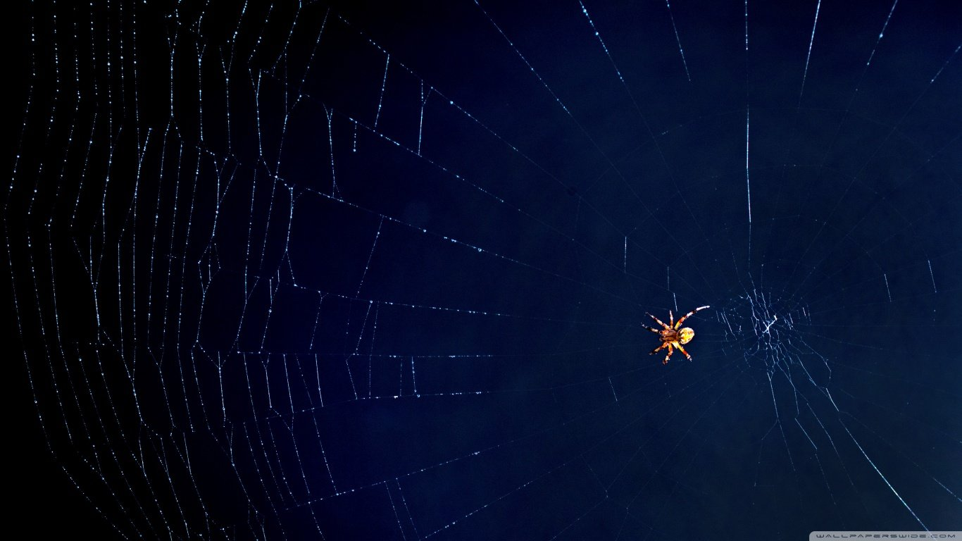 High resolution Spider laptop background ID:22241 for desktop