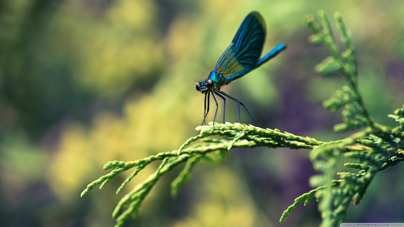 Free Dragonfly high quality background ID:467554 for laptop desktop