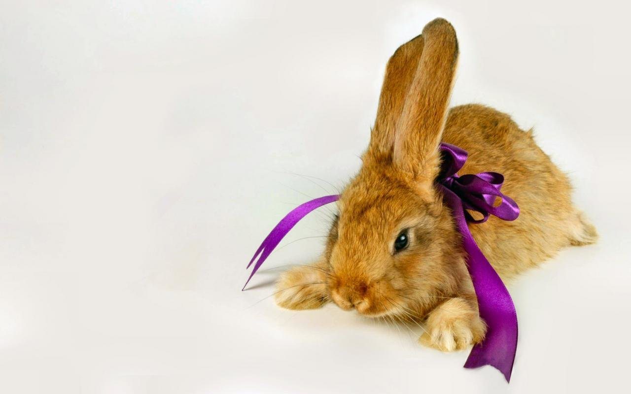 Awesome Rabbit & Bunny free background ID:248984 for hd 1280x800 PC