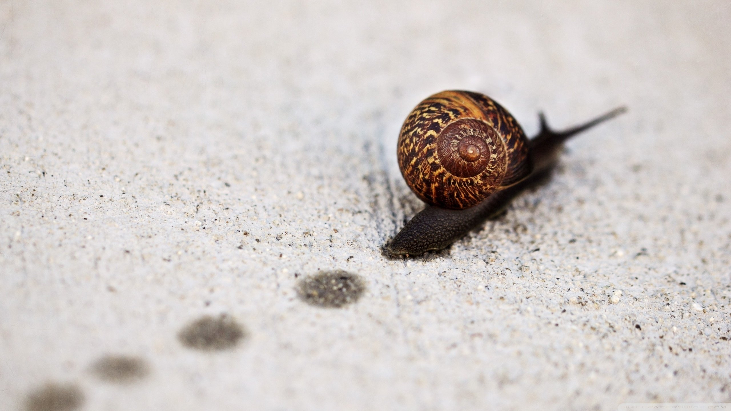 Free Snail high quality wallpaper ID:198819 for hd 2560x1440 PC
