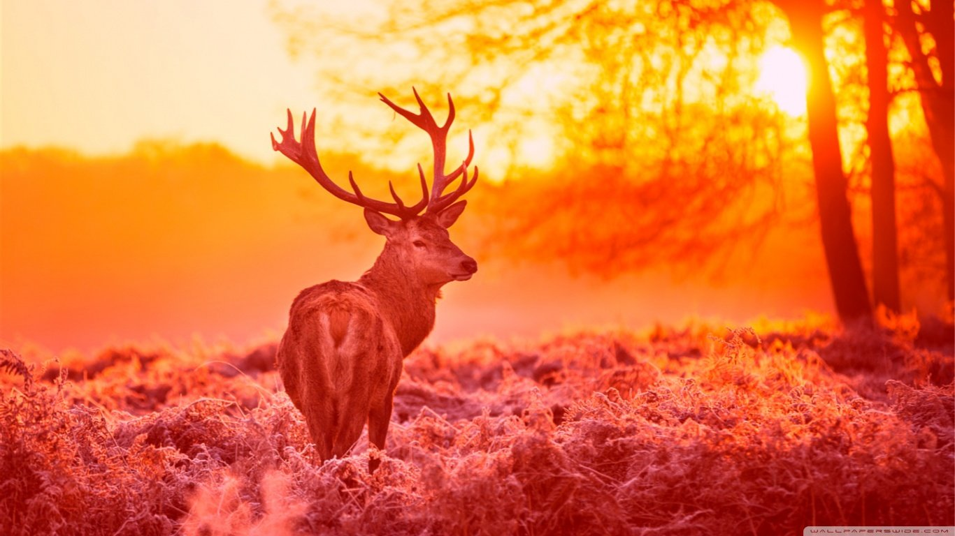 Download laptop Deer PC background ID:238735 for free