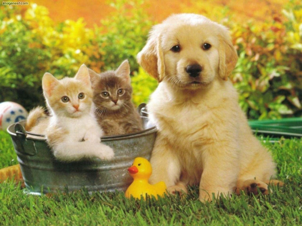 High resolution Cat and Dog hd 1280x960 wallpaper ID:125326 for computer