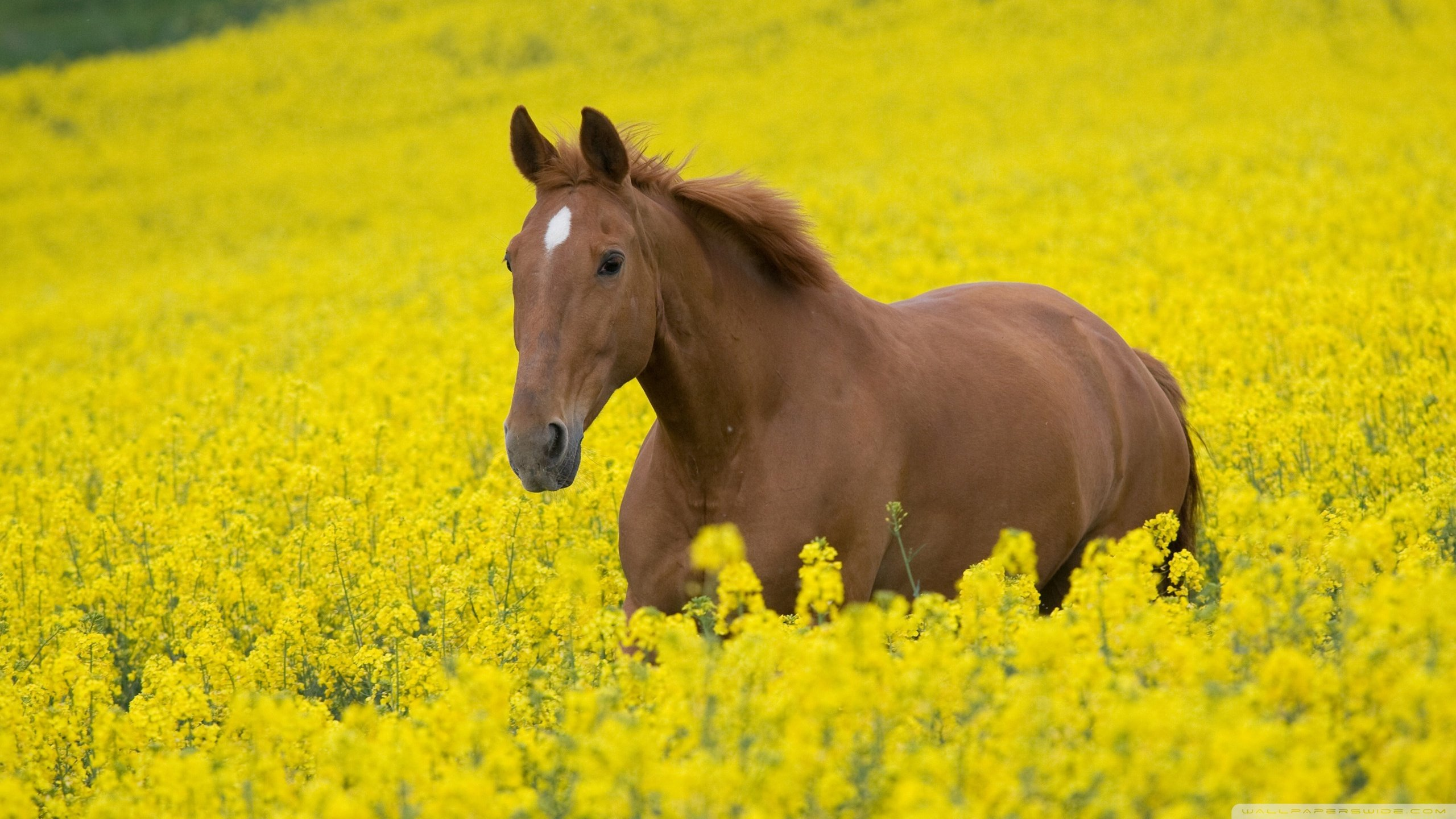 Awesome Horse free wallpaper ID:23598 for hd 2560x1440 desktop