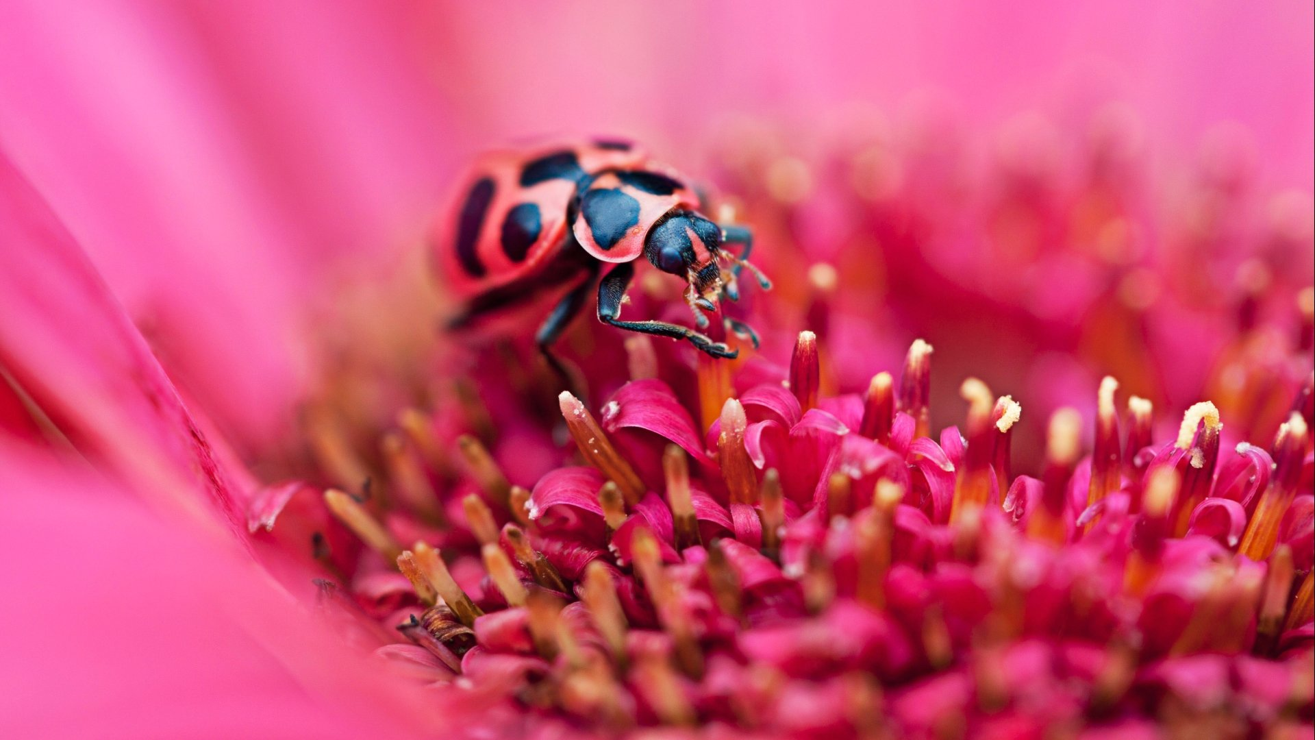 Awesome Ladybug free background ID:270545 for full hd PC
