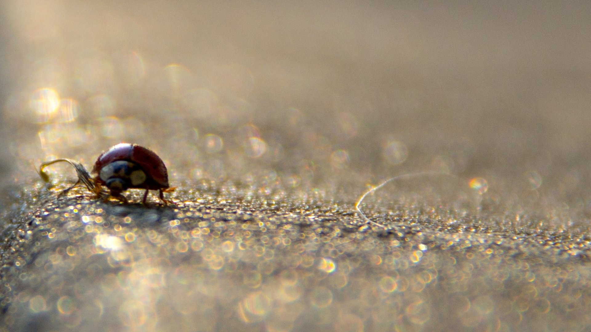 Best Ladybug wallpaper ID:270536 for High Resolution hd 1920x1080 PC